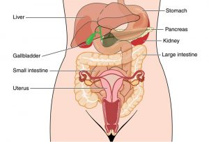 Pelvic Abdominal Pain Gynaecology The Surrey Park Clinic